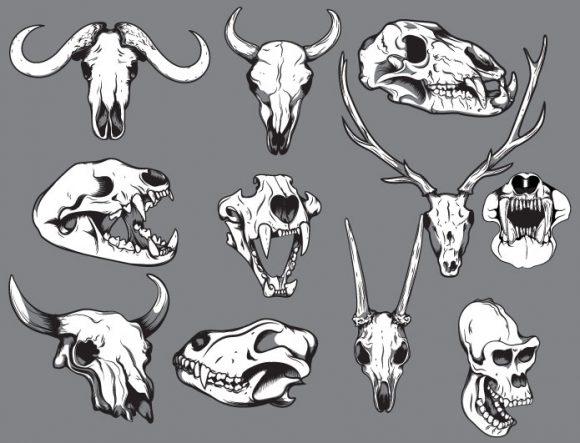 Skulls vector pack 12 Skulls animal