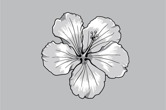 Floral vector pack 72 Floral floral