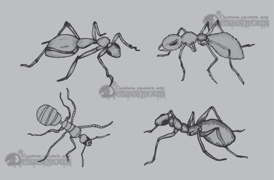 Insects vector pack Nature insect