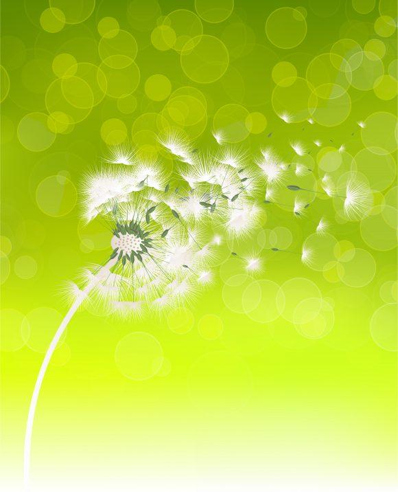 Vector Spring Background With Dandelion Vector Illustrations floral