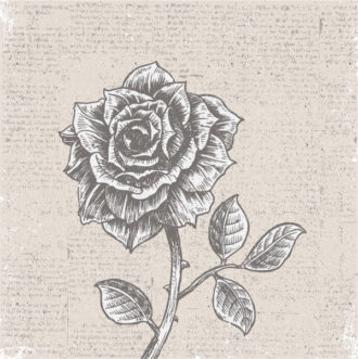 Rose With Vintage Background Vector Illustration Vector Illustrations old
