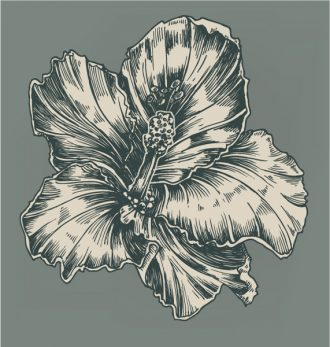 Vintage Hibiscus Vector Illustration Vector Illustrations old