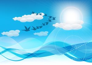 Vector Summer Background With Birds Vector Illustrations sea