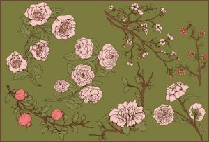 Japanese Flowers Pack Vector packs flowers