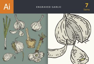 Engraved Garlic Vector Set 1 Vector packs vintage