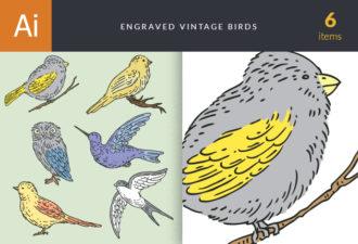 Engraved Vintage Birds Vector Set 1 Vector packs vintage