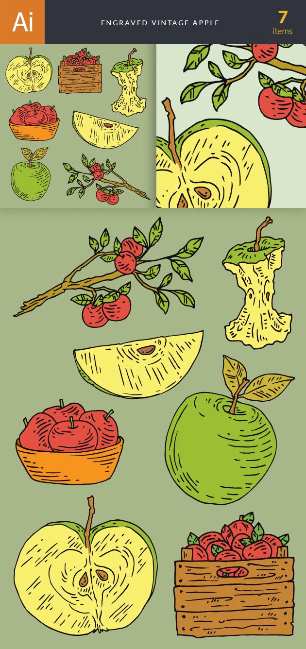 Engraved Vintage Apple Vector Set 1 designtnt engraved vintage apple vector set 1 vector large