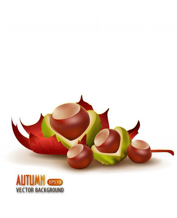 autumn background vector illustration 2015 03 03 017