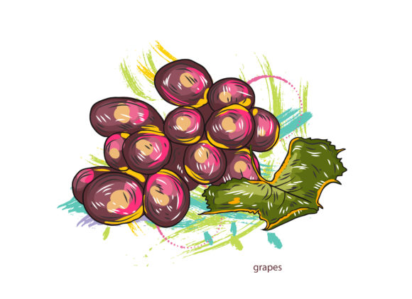 vector grapes with colorful splashes Vector Illustrations old