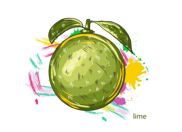 vector lime with colorful splashes 2015 03 03 068