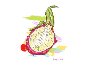 vector dragon fruitwith colorful splashes Vector Illustrations old