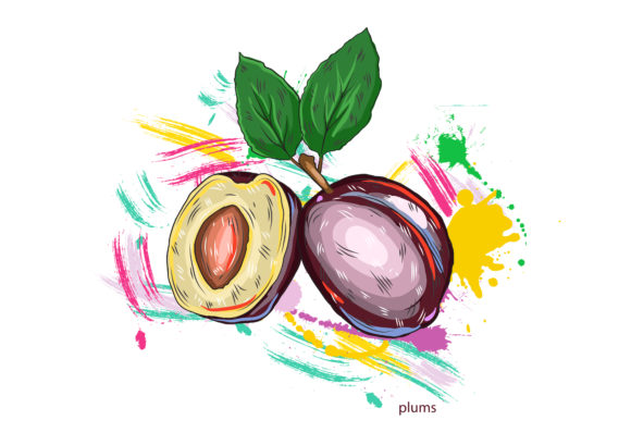 vector plums with colorful splashes Vector Illustrations old