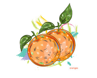 vector oranges with colorful splashes Vector Illustrations old