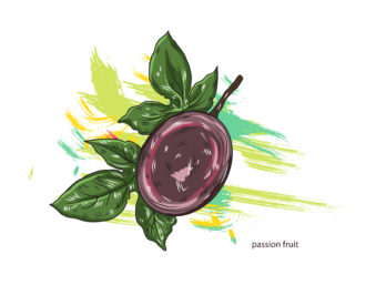 vector passion fruit with colorful splashes Vector Illustrations old