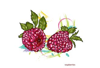 vector raspberries with colorful splashes Vector Illustrations old