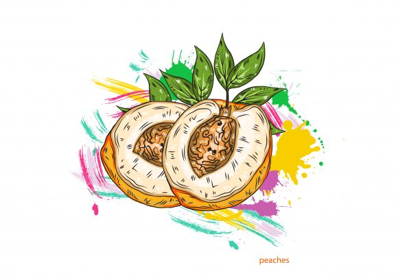vector peaches with colorful splashes Vector Illustrations old