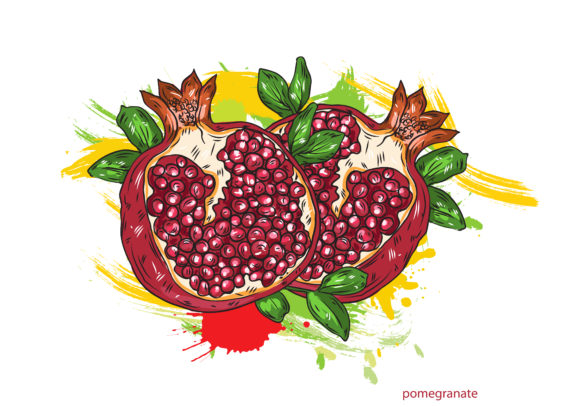 vector pomegranate with colorful splashes Vector Illustrations old