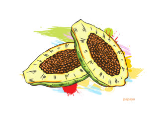 vector papaya with colorful splashes Vector Illustrations old