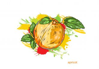 vector apricot with colorful splashes Vector Illustrations old