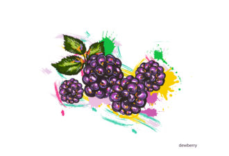 vector dewberry with colorful splashes Vector Illustrations old