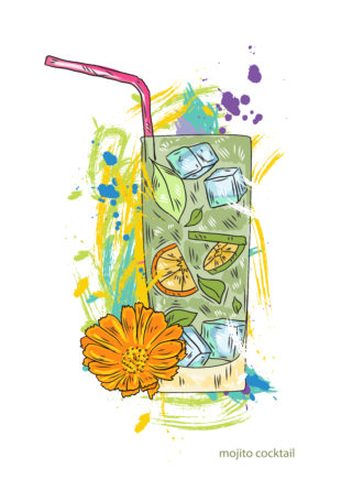 mojito cocktail vector  illustration Vector Illustrations cocktail