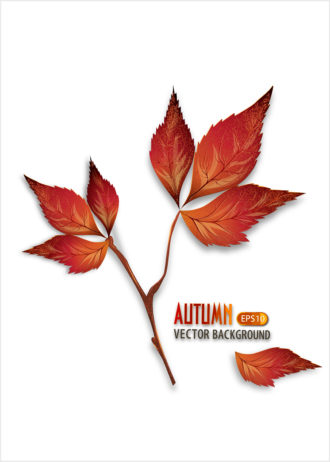 vector autumn background with leaves Vector Illustrations decoration,ornate,abstract,symbol,design,illustration,background,art,artwork,creative,decor,elegant,image,vector,floral,leaf,plant,flower,fake,autumn,season,
