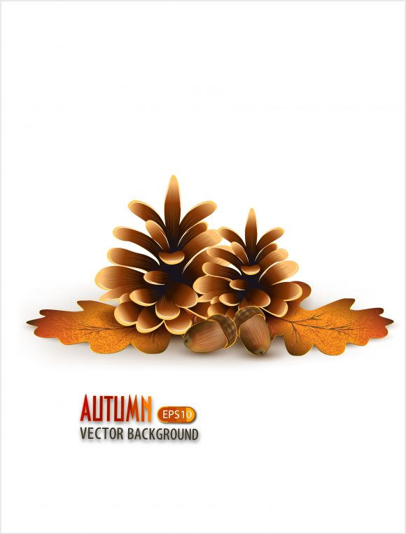 vector autumn background with pine 2015 03 03 978