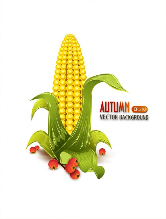 vector autumn background with corn Vector Illustrations decoration,ornate,abstract,symbol,design,illustration,background,art,artwork,creative,decor,elegant,image,vector,floral,leaf,plant,flower,fake,autumn,season,corn,