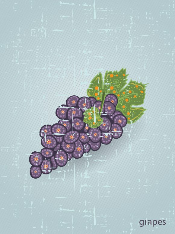 vector vintage background with grapes Vector Illustrations old