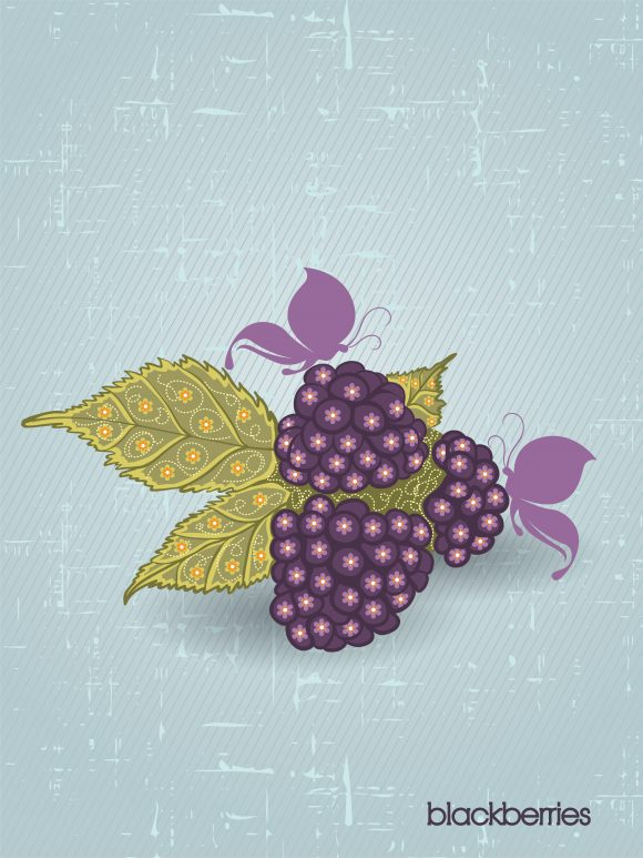 vector vintage background with blackberries Vector Illustrations old