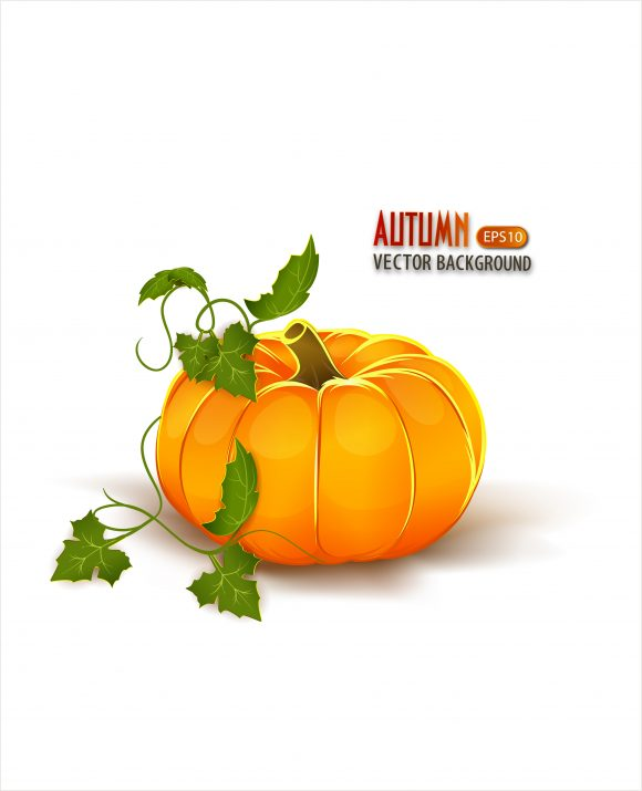 vector autumn background with pumpkin 2015 08 422