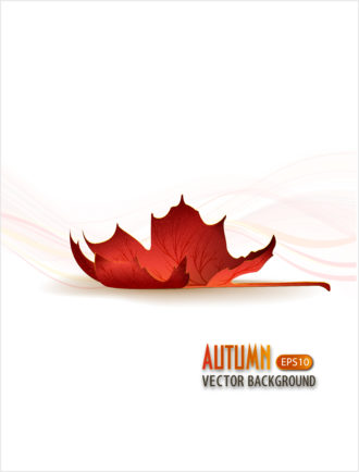 vector autumn background with leaf Vector Illustrations decoration,ornate,abstract,symbol,design,illustration,background,art,artwork,creative,decor,elegant,image,vector,floral,leaf,plant,flower,fake,autumn,season,
