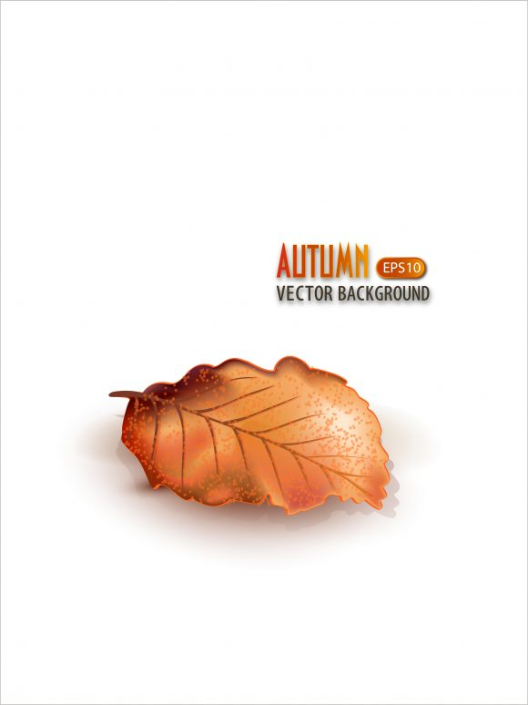 vector autumn background with leaf 2015 08 456