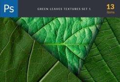Green Leaves Set 1 Textures green leaves textures set for photoshop