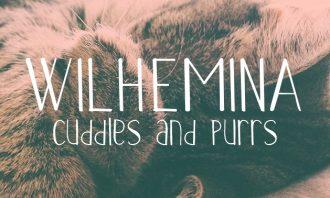 Full library Pricing Wilhemina small