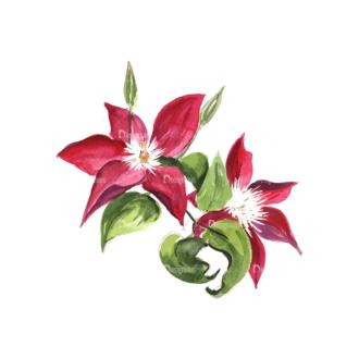 Flower Clematis Red Clip Art - SVG & PNG vector