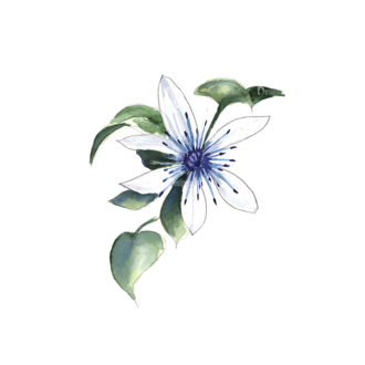 Flower Clematis White Clip Art - SVG & PNG vector