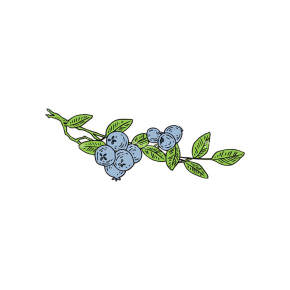 Engraved Berries Vector Set 1 Vector Berries 05 Food drinks engraved berries vector set 1 vector berries 05