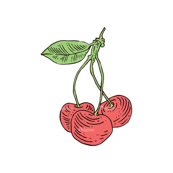 Engraved Cherries Vector Set 1 Vector Cherries 04 5