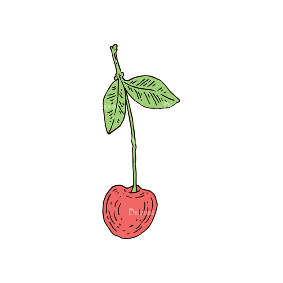 Engraved Cherries Vector Set 1 Vector Cherry 1