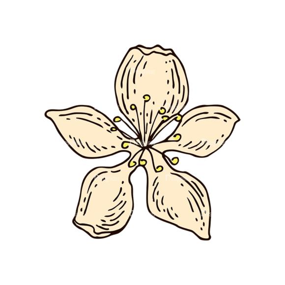 Engraved Cherries Vector Set 1 Vector Flower 1