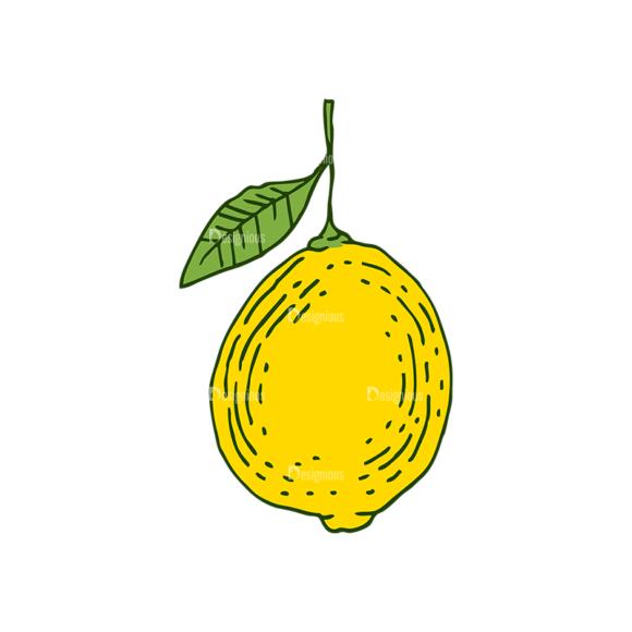 Engraved Lemons Vector Set 1 Vector Lemon 01 1
