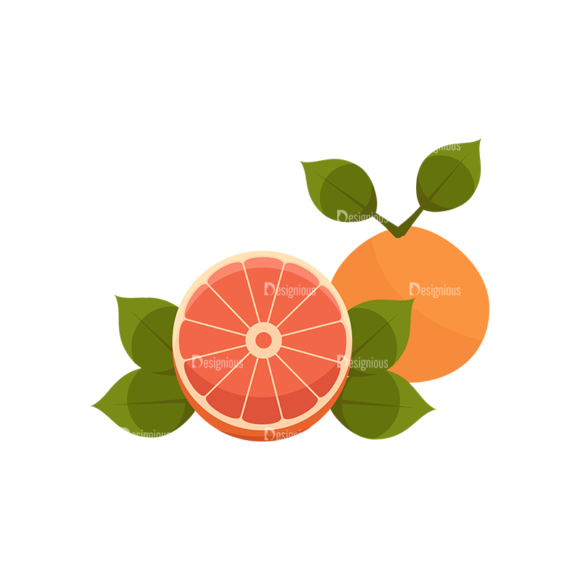 Exotic Fruits Vector Set 1 Vector Oranges Grapefruit 1