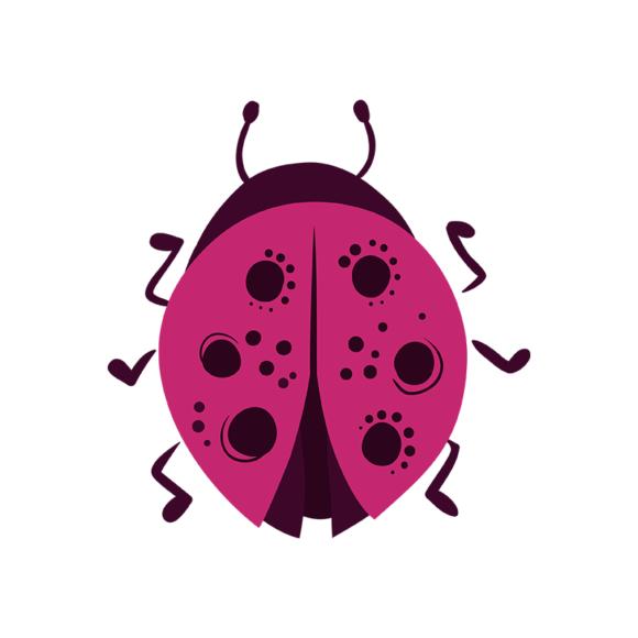 Insects Ladybug 1