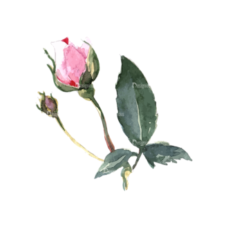 Roses Rose Clip Art - SVG & PNG vector