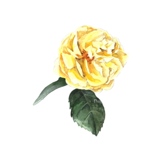 Roses Yellow 05 Clip Art - SVG & PNG vector