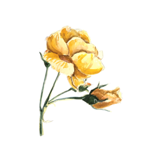 Roses Yellow 06 Clip Art - SVG & PNG vector