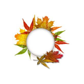 Autumn Elements Vector Leaves 01 Clip Art - SVG & PNG vector