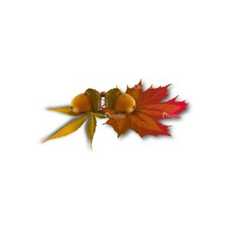 Autumn Elements Vector Leaves 02 Clip Art - SVG & PNG vector