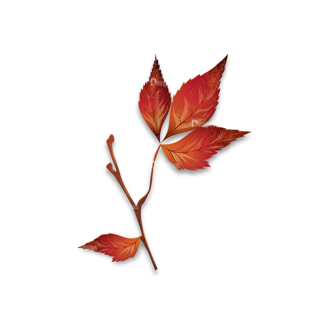 Autumn Elements Vector Leaves 13 Clip Art - SVG & PNG vector